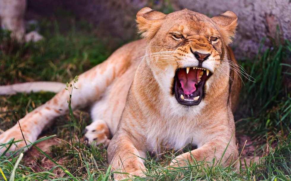 У Прилуках застрелили левицю, яка напала на людину, а потім втекла з цирку