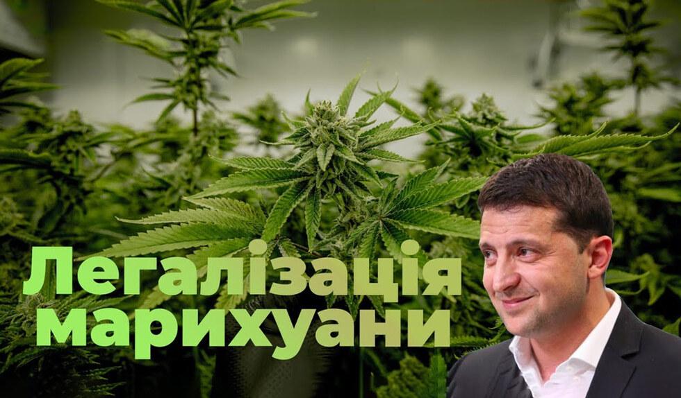 Зеленський вимагає від Ради терміново легалізувати медичну коноплю